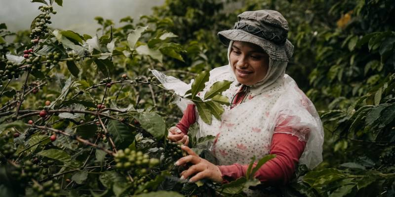 Hutten introduceert We Colombian Coffee